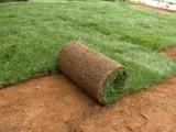 ΓΚΑΖΟΝ ΧΛΟΟΤΑΠΗΤΕΣ ΚΗΠΟΙ ΚΑΤΑΣΚΕΥΕΣ γκαζόν φυσικό  χλοοτάπητας έτοιμος φυσικός  κηποι κατασκευη τοποθέτηση