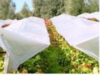 Αδιάβροχα και αντιχαλαζικα πανιά αμπελιού δίχτυα