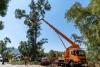 ψηλών υψηλών  δέντρων και με γερανό εντός Αττικής