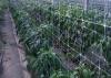 Δίχτυα αναρρίχησης φυτών 2#50 κ2#100 μέτρων