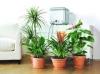 Αυτοματο ποτισμα Κατασκευη κηπων με γκαζόν φυτά δένδρα γλάστρες βότσαλα φωτισμός. χλοοτάπητα έτοιμο  κατασκευή κήπου