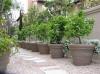 Κατασκευη κηπων με γκαζόν αυτόματο πότισμα φυτά δένδρα γλάστρες βότσαλα φωτισμός. χλοοτάπητα έτοιμο  κατασκευή κήπου